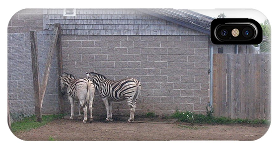 Zebra IPhone X Case featuring the photograph Plains Zebras In The Corner by Melissa Parks
