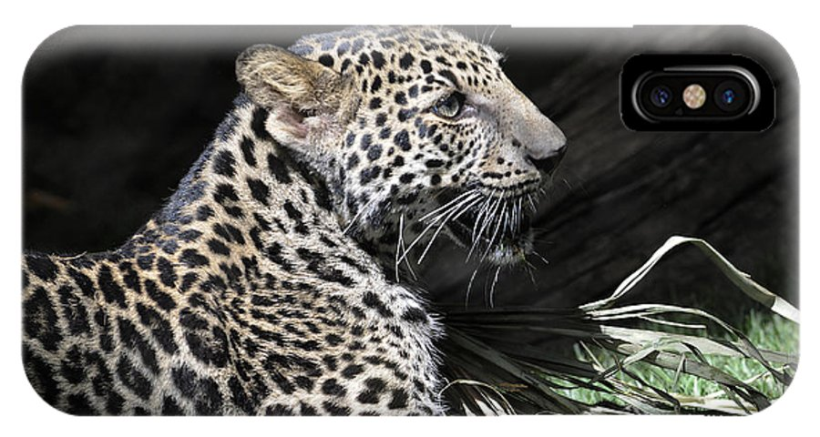 Leopard IPhone X Case featuring the photograph Playtime by Keith Lovejoy