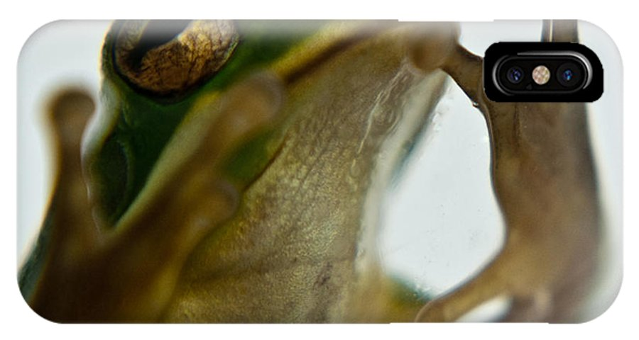 Frog IPhone X Case featuring the photograph Please Not In A Frogs Eye by Douglas Barnett