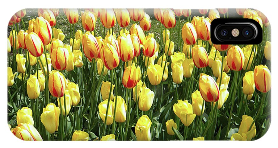 Tulips IPhone X Case featuring the photograph Plenty Of Tulips by Manuela Constantin