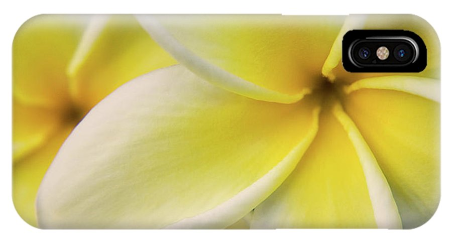 Nature IPhone Case featuring the photograph Plumeria Flowers by Julia Hiebaum