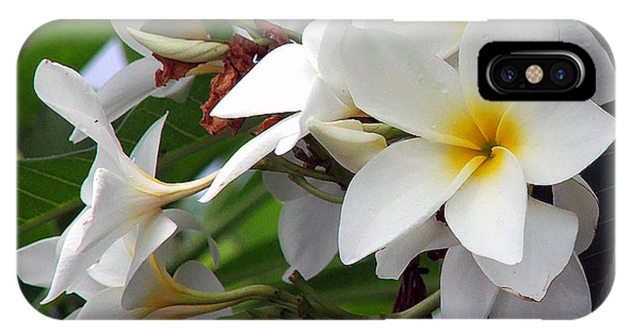Flower IPhone X Case featuring the photograph Plumeria by Robert Meanor