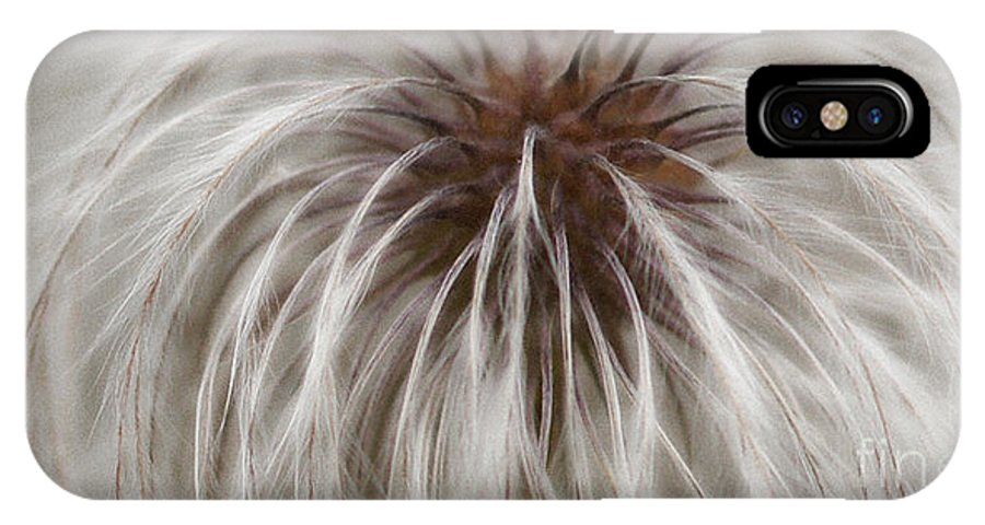 Plume IPhone X Case featuring the photograph Plumosa by Linda Shafer