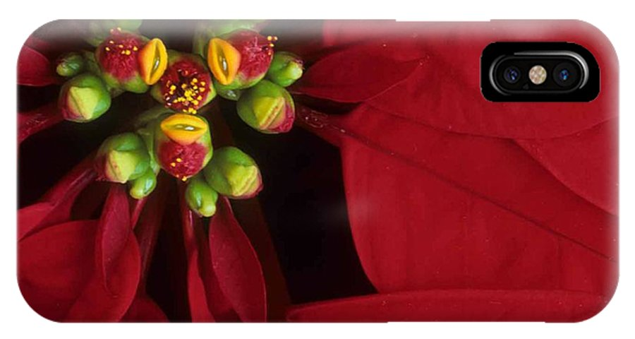 Poinsettia IPhone X Case featuring the photograph Poinsettia by Laurie Paci