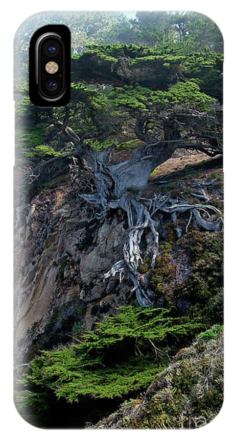 Landscape IPhone X / XS Case featuring the photograph Point Lobos Veteran Cypress Tree by Charlene Mitchell