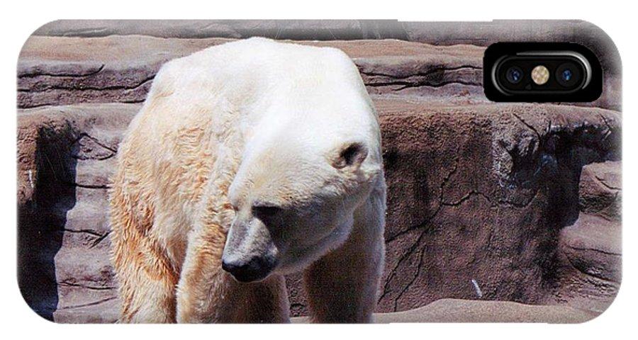 Bear IPhone X Case featuring the photograph Polar Bear 2 by Crystal Webb
