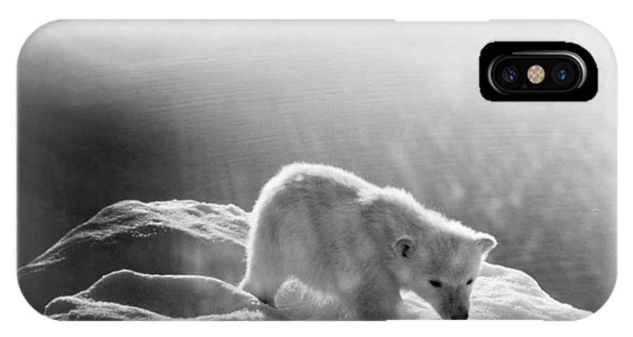 20th Century IPhone X Case featuring the photograph Polar Bear Cub by Granger