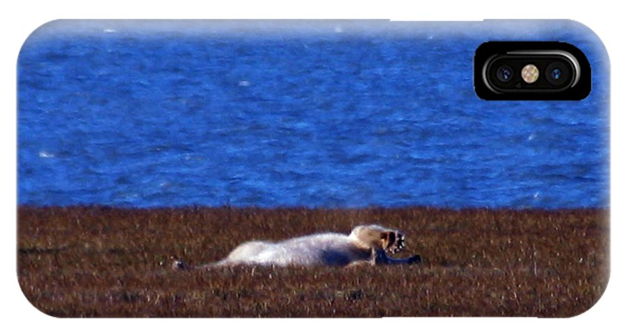 Polar Bear IPhone X Case featuring the photograph Polar Bear Rolling In Tundra Grass by Anthony Jones