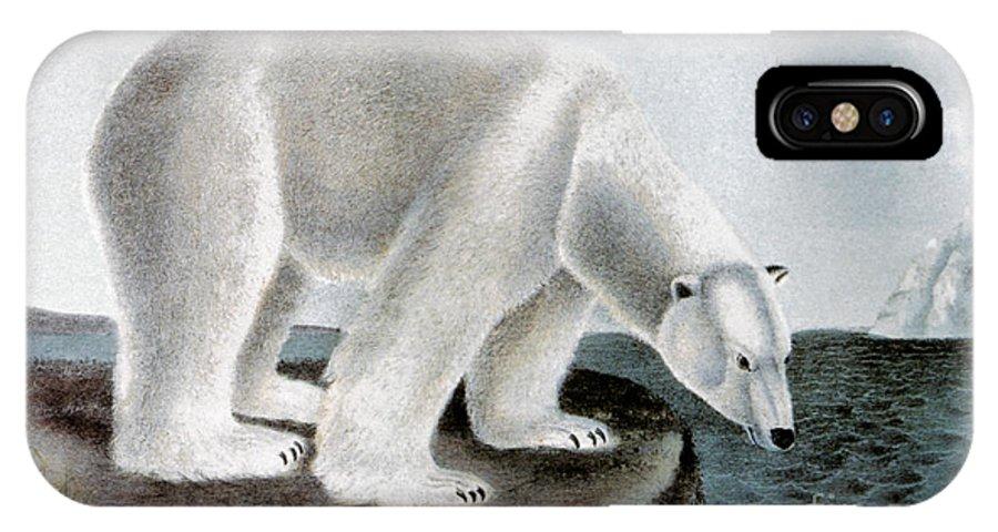 1846 IPhone X Case featuring the photograph POLAR BEAR (Ursus maritimus) by Granger
