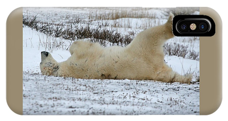 Polar Bear IPhone X / XS Case featuring the photograph Polar Bear Yoga by Connie Jeffcoat