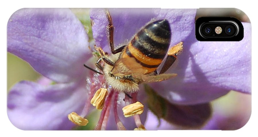 Bees IPhone X Case featuring the photograph Pollinating 4 by Amy Fose