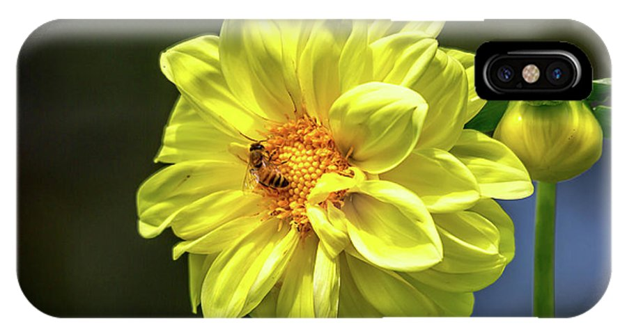 Yellow IPhone X / XS Case featuring the photograph Pollinating by Allan Nieva