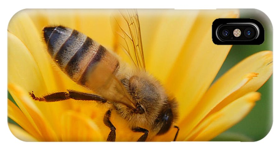 Bee IPhone Case featuring the photograph Pollination 2 by Amy Fose