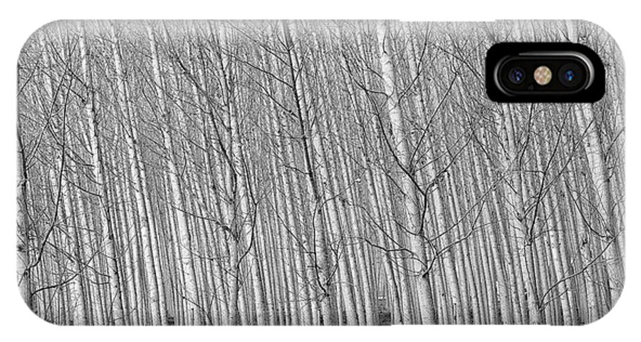 Monochrome IPhone X Case featuring the photograph Poplars Beauty Trees by Guido Montanes Castillo