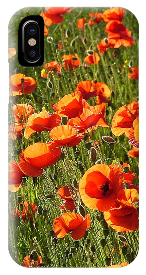 Poppies IPhone X Case featuring the photograph Poppies by Bob Kemp