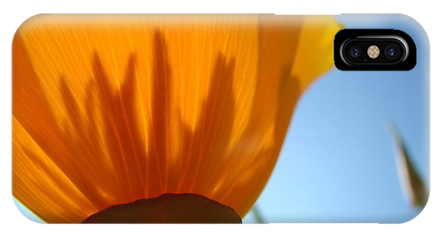 �poppies Artwork� IPhone X Case featuring the photograph Poppies Sunlit Poppy Flower 1 Wildflower Art Prints by Baslee Troutman