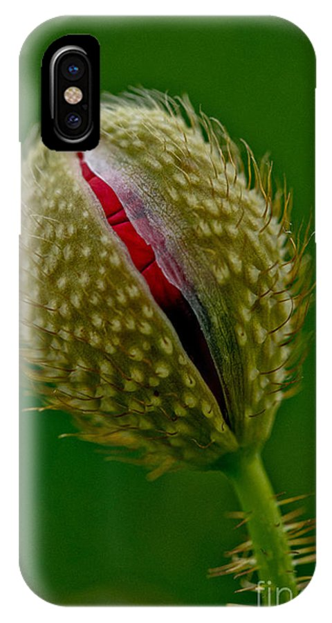 Poppy Bud IPhone X Case featuring the photograph Poppy Bud by Brothers Beerens