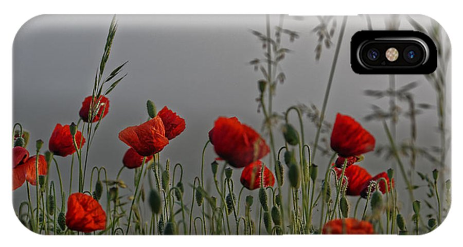 Agriculture IPhone X Case featuring the photograph Poppy Field In The Cold Morning by Adrian Bud
