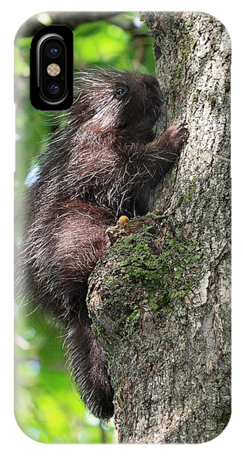 Porcupine IPhone X Case featuring the photograph Porcupine In Sherbrooke Quebec by Pierre Leclerc Photography