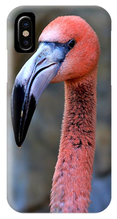 Flamingo IPhone X / XS Case featuring the photograph Portrait In Pink by Stacie Gary