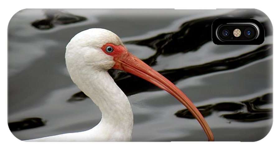 Birds IPhone X Case featuring the photograph Portrait Of A White Ibis by Rosalie Scanlon