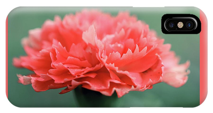 Flower IPhone X Case featuring the photograph Posh Carnation by April Zaidi