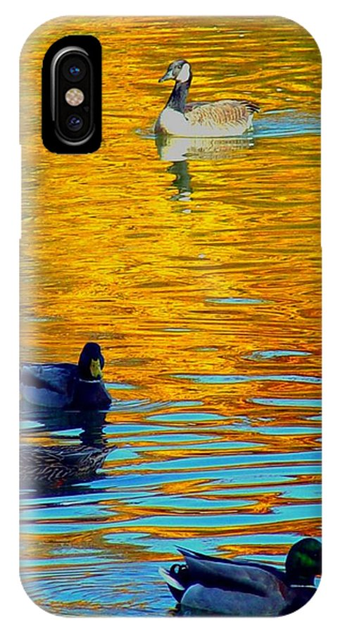 Ducks Malard Lake Gold Canada Geese Blue IPhone X Case featuring the photograph Possibilities by Jack Diamond