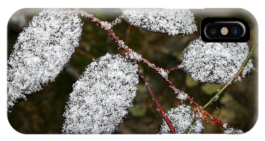 Winter Season Cold Snow Tree Branch Leaf Leaves White Green Frosted Powder IPhone X Case featuring the photograph Powdered by Andrei Shliakhau