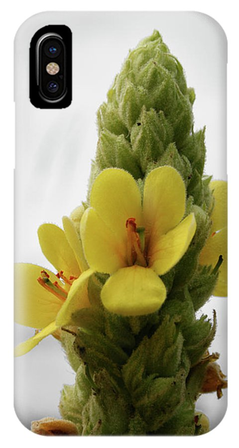 Wildflower IPhone X Case featuring the photograph Prairie Cone by Dylan Punke