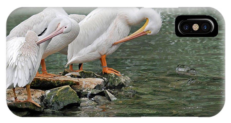 Teresa Blanton IPhone X Case featuring the photograph Prayer Of The Pelicans by Teresa Blanton
