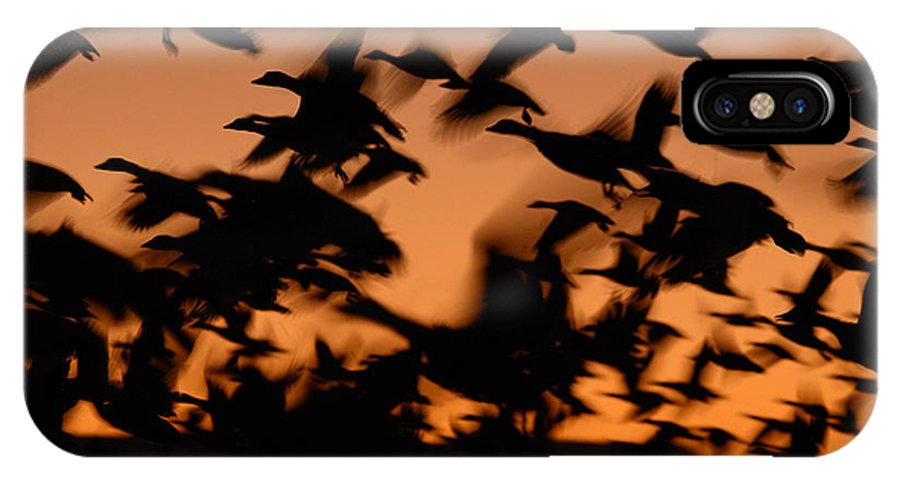 Geese IPhone Case featuring the photograph Pre-dawn Flight Of Snow Geese Flock by Max Allen