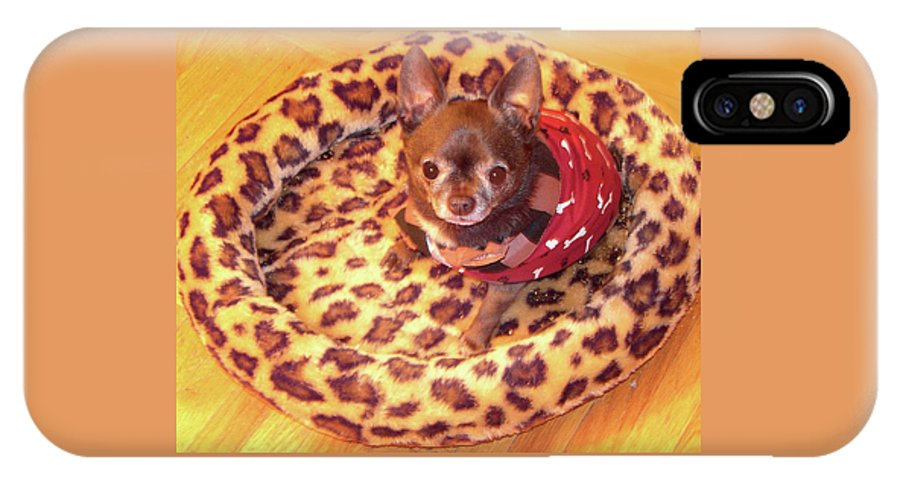 Chihuahua IPhone X Case featuring the photograph Precious One by Sheryl R Smith