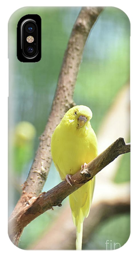 Budgie IPhone X Case featuring the photograph Precious Yellow Budgie Parakeeet In The Wild by DejaVu Designs