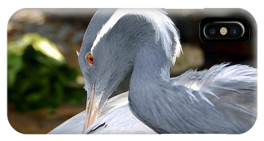 Bird IPhone X Case featuring the photograph Preening Bird by David Lee Thompson