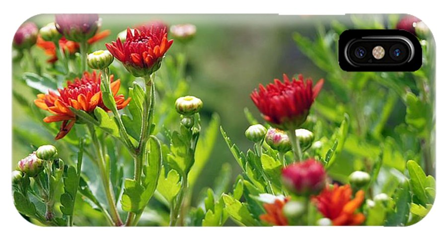Flower IPhone X Case featuring the photograph Pretty As A Picture by Kathy Bucari