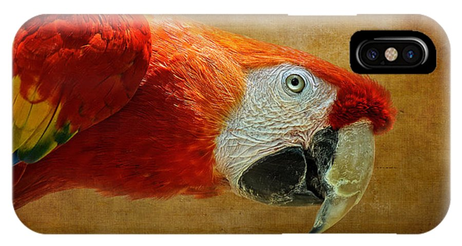 Parrot IPhone X Case featuring the photograph Pretty Boy by Lois Bryan