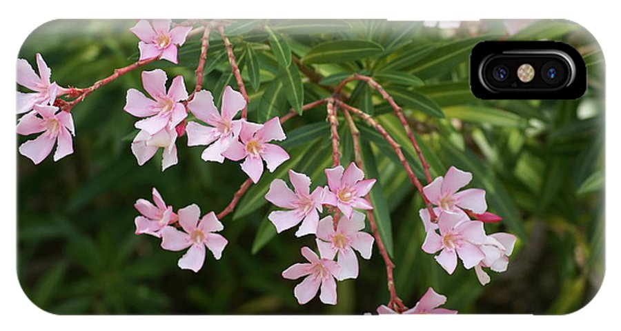 Pink IPhone X Case featuring the painting Pretty In Pink by Debbie May