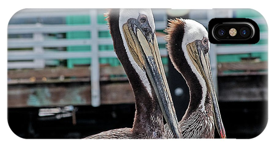 Pelican IPhone X / XS Case featuring the photograph Pretty Pair by Jay Billings