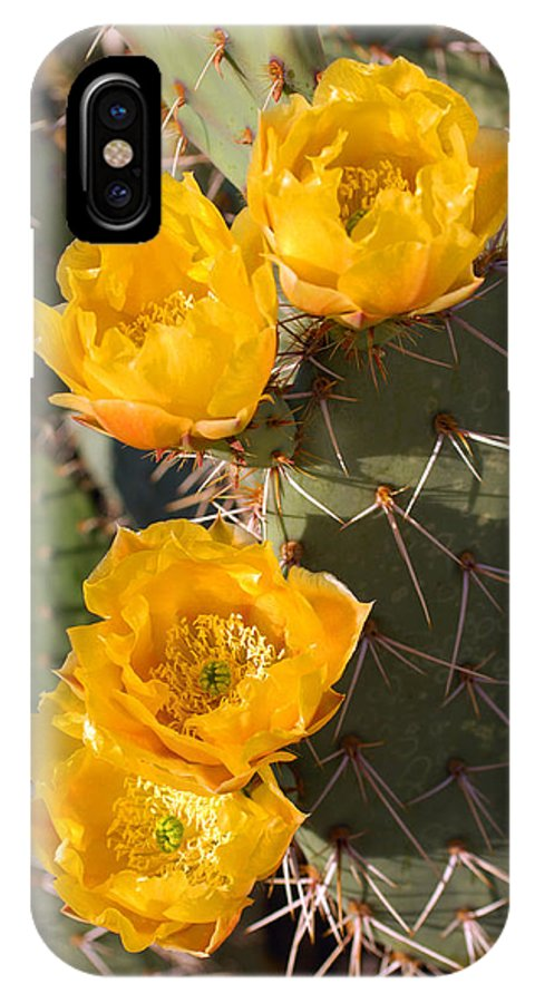 Cactus IPhone X Case featuring the photograph Prickly Pear Cactus Flowers by Jill Reger