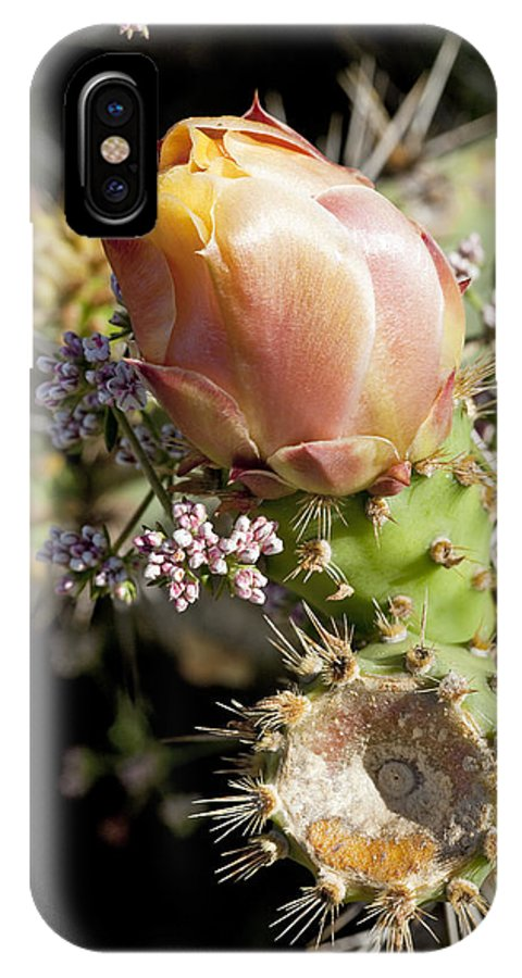Prickly Pear IPhone X Case featuring the photograph Prickly Pear Flower 4 by Kelley King