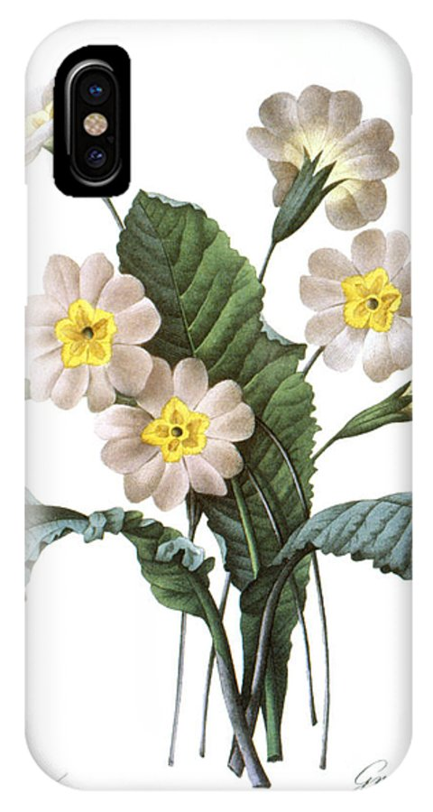 1833 IPhone X Case featuring the photograph Primrose (primula Aucalis) by Granger