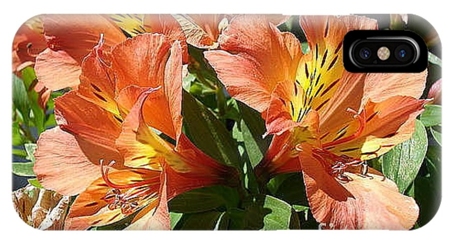 Fire IPhone X Case featuring the photograph Princess Lillies by Ronine McIntyre