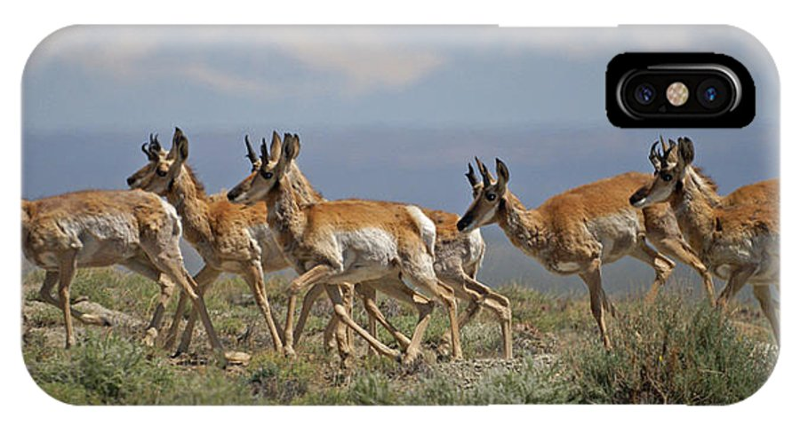 Pronghorn IPhone X Case featuring the photograph Pronghorn Antelope Running by Heather Coen