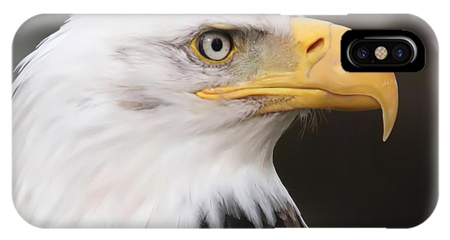 Eagle IPhone X Case featuring the photograph Proud Eagle by Angie Vogel