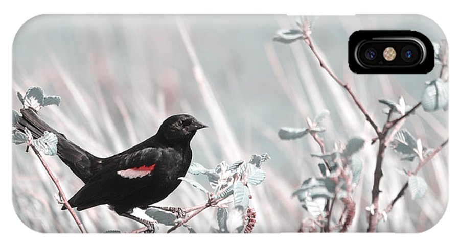 Bird IPhone X Case featuring the photograph Proud Male by Aimelle