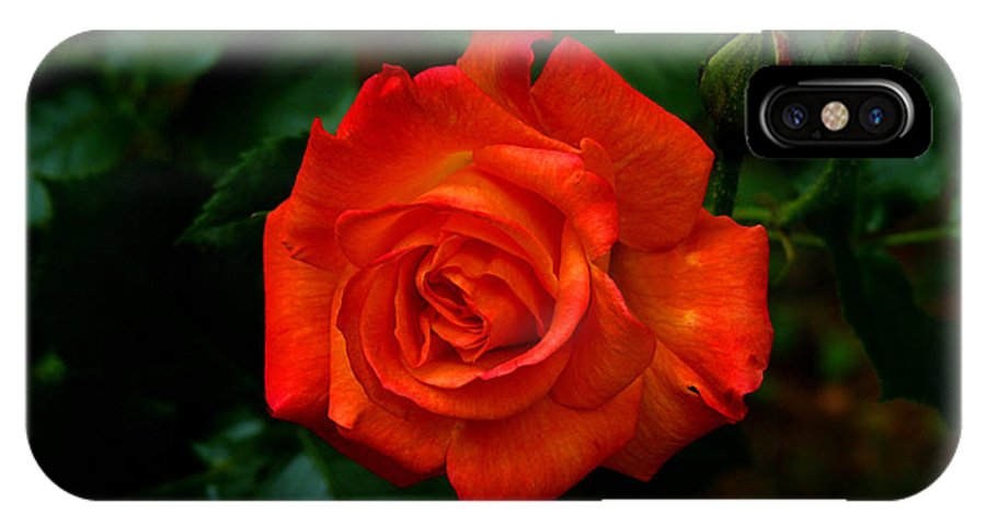 Rose IPhone X / XS Case featuring the photograph Proud Of You by Gail Bridger