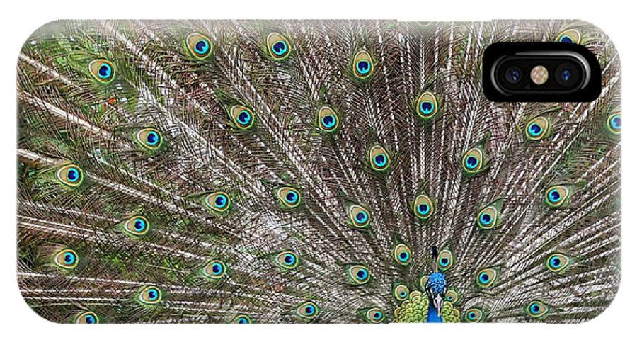 Peacock IPhone X Case featuring the photograph Proud Peacock by Sabrina L Ryan