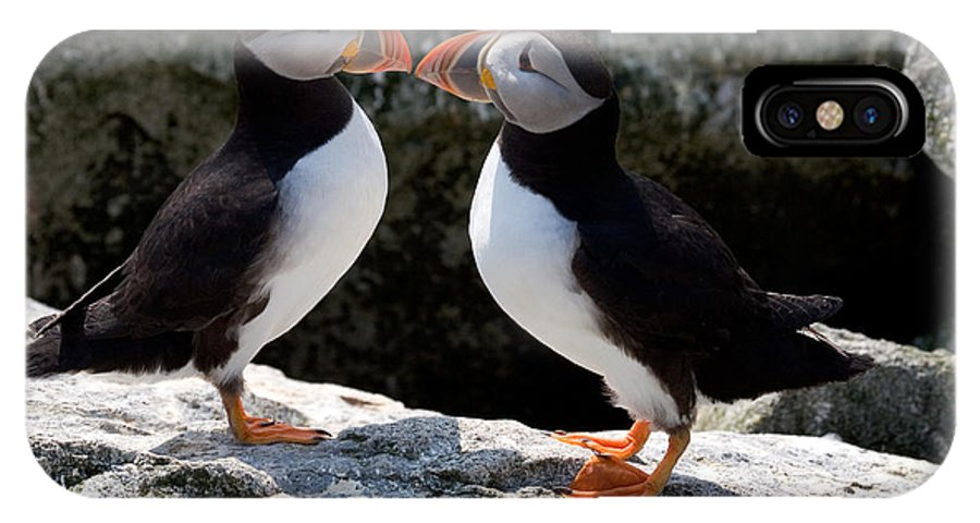 Puffin IPhone X Case featuring the photograph Puffin Love by Brent L Ander