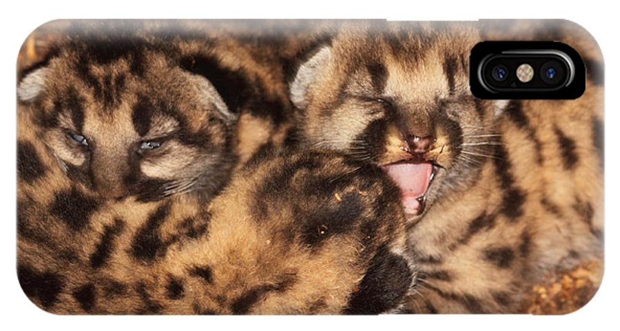 Baby IPhone X Case featuring the photograph Puma Kitten Calling by Max Allen