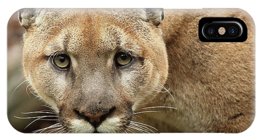 Autumn IPhone X Case featuring the photograph Puma Male Approaching by Max Allen